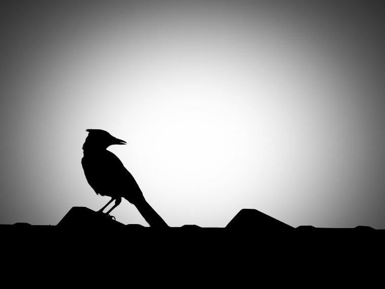 Avian Night